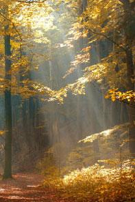 Holz - nachwachsender Rohstoff